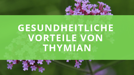Die gesundheitliche Wirkung von Thymian
